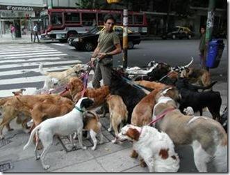 Walking Dog Puddles
